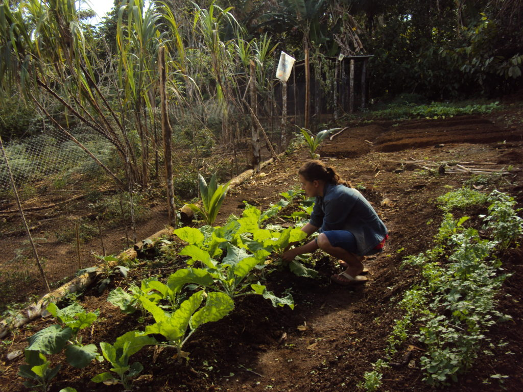 Produção agroecológica garante Segurança Alimentar e Nutricional (2011)