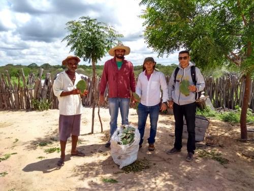 Produtores rurais recebem Palma resistente em Pilão Arcado