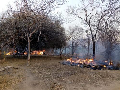 FUNDO DE PASTO   Incêndio destroi área preservada da Caatinga em Campo Alegre de Lourdes