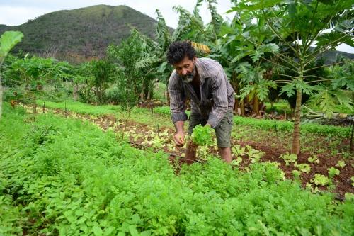 Muito além dos R$ 600: movimentos sociais querem R$ 1 bilhão específico para agricultura camponesa
