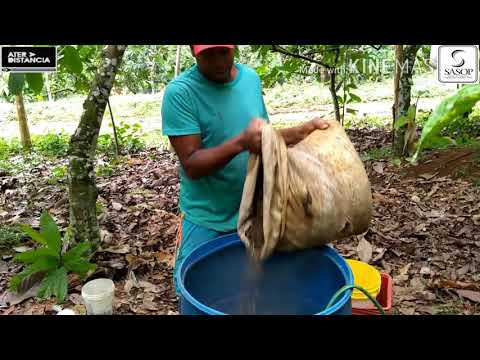 Vídeo aula sobre Biocalda