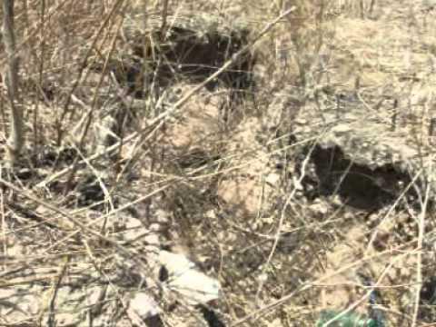 Vídeo Caatinga Fonte de Vida
